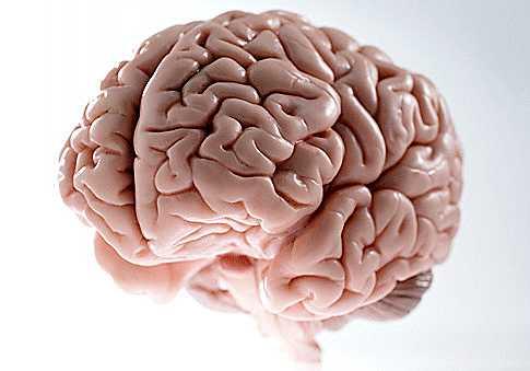 a brain of two hemispheres