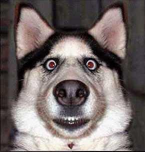 a stunned dog