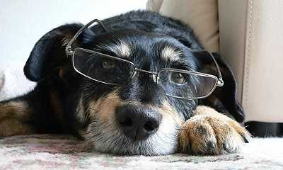 an intelligent dog