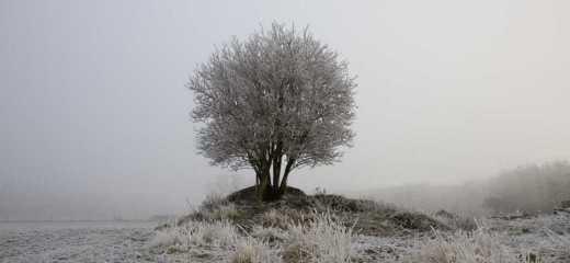 unimportant shrub