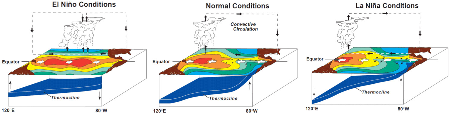 an introduction to el nino a reoccurring phenomenon for centuries 1 introduction the el niño southern oscillation cycle (enso) was discovered in the 1970s, when satellite images of the earth were first routinely collected since.